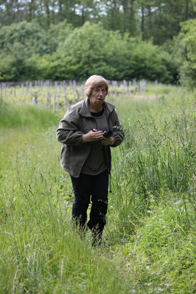 Marie-Thé découvre les platanthera chlorentha